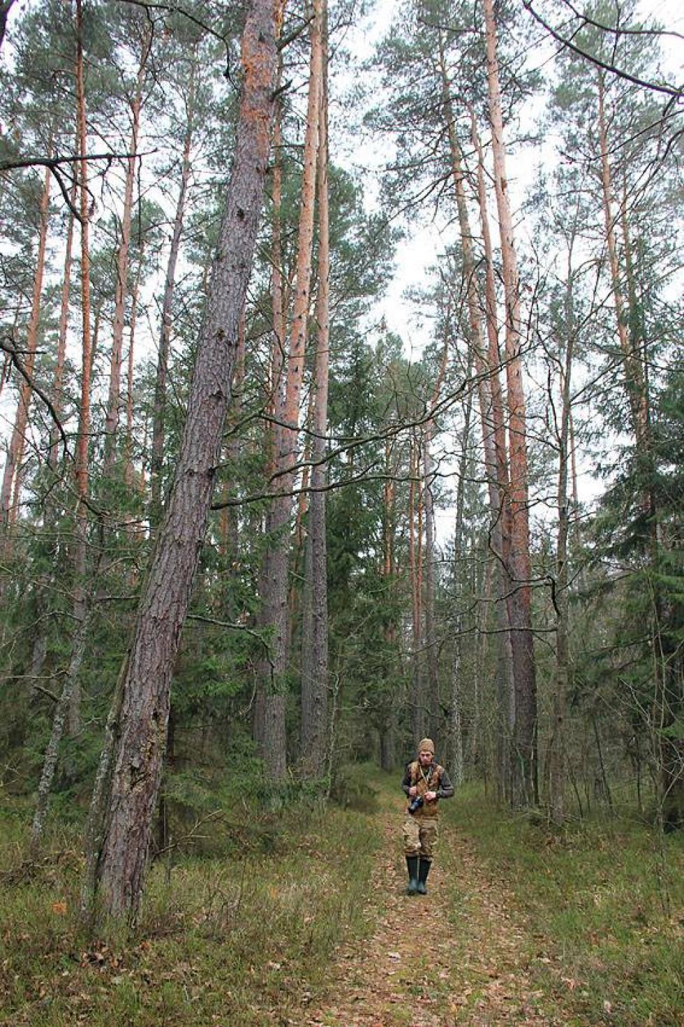 Високий, зрілий ліс в заплаві Стобихівки