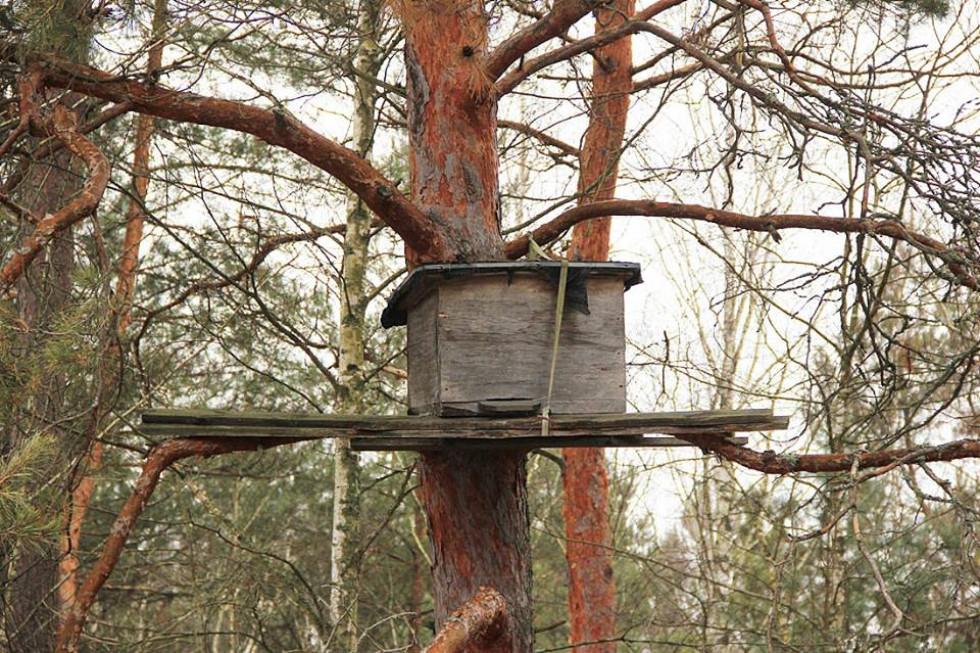 Вулик на дереві