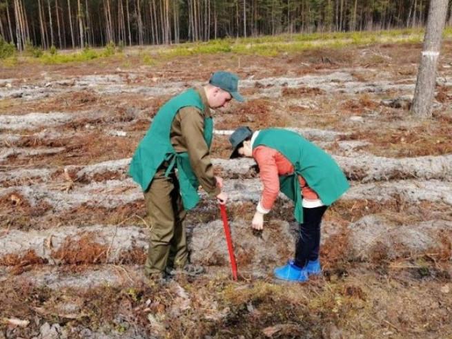 Працівники школи села Полиці разом з лісівниками висаджують молодий ліс на території місцевого лісництва