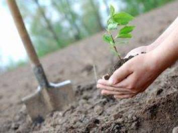 Жителів міста Камінь-Каширський запрошують в парк садити дерева.