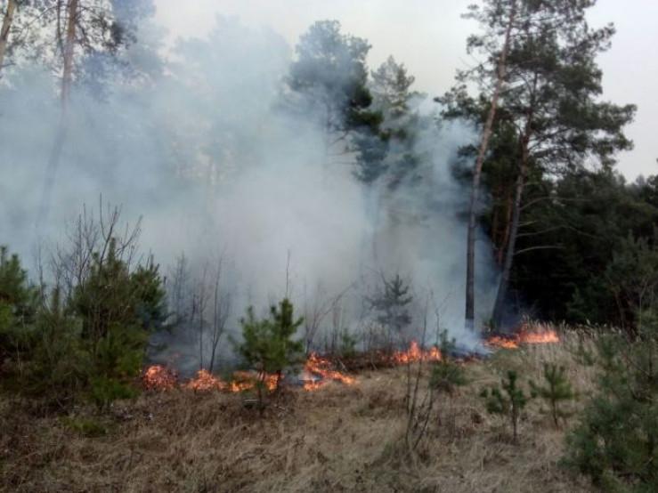 Волинь горить: лісівники закликають не палити сухостій