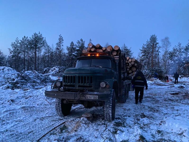 На Ковельщині виявили вантажівку із незаконно зрубаною деревиною