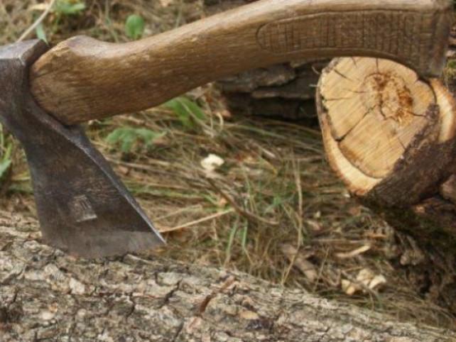 Самовільна порубка дубів