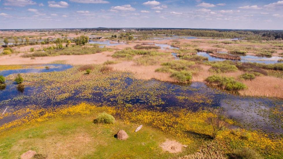 Річка стохід поблизу села Рудка-Червинська