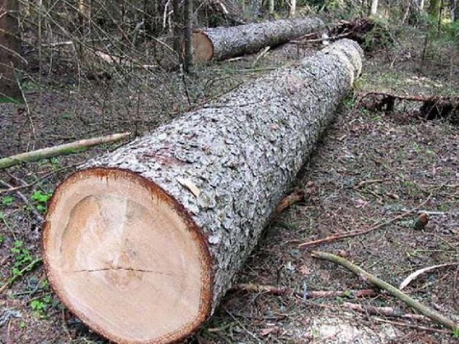 Два жителі Камінь-Каширщини заплатять за повторну крадіжку лісу штраф та збитки