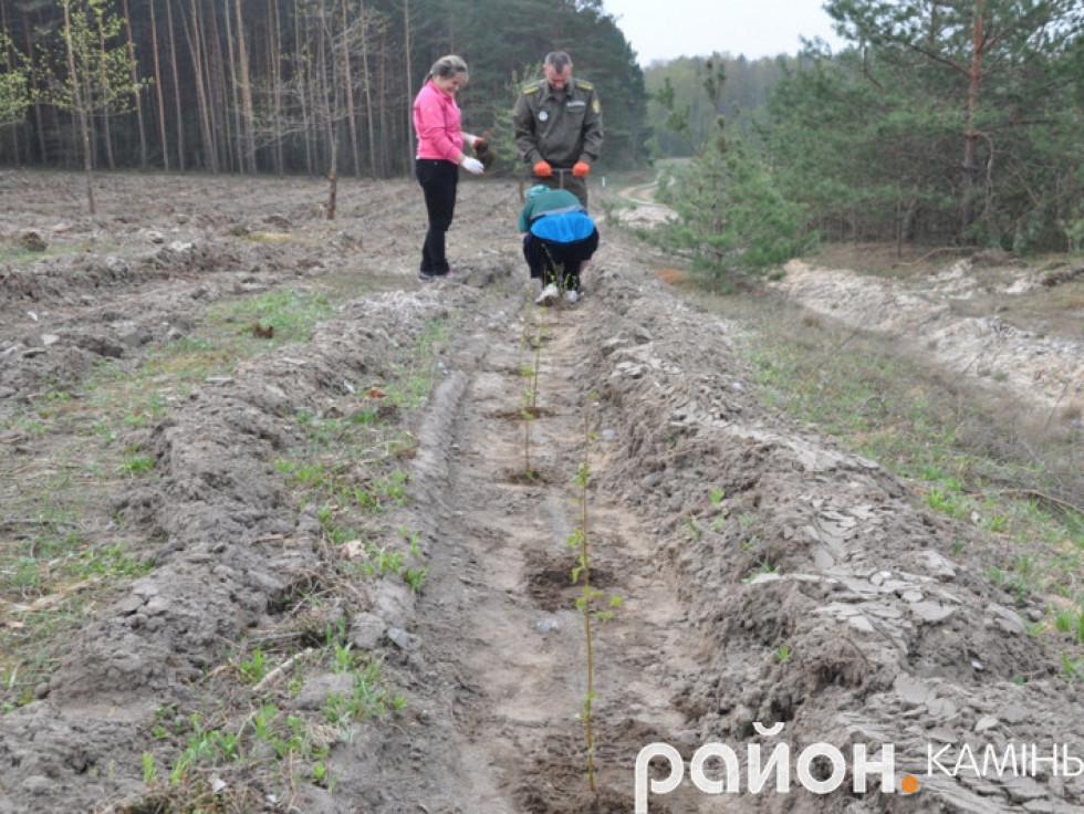 Весняна лісокультурна кампанія. Квітень 2018р.
