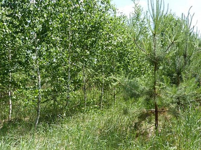 Як на Камінь-Каширщині відновлюють ліси