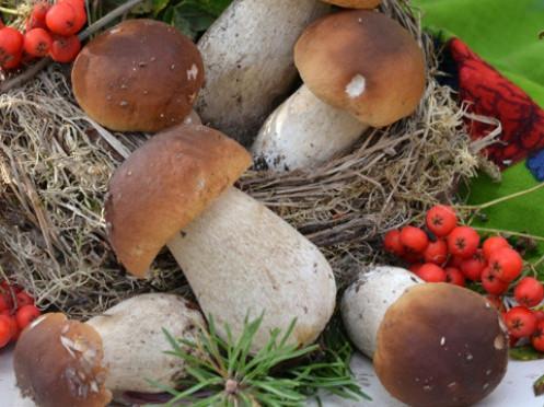 Дари лісу поповнили бюджет Камінь-Каширського району
