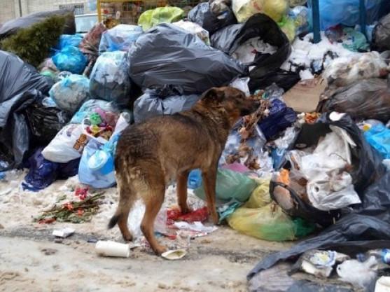 Чи реально подолати проблему зі сміттям у Камені-Каширському