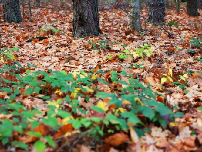 Останній подих осені: лісівники поділилися чарівними світлинами лісу