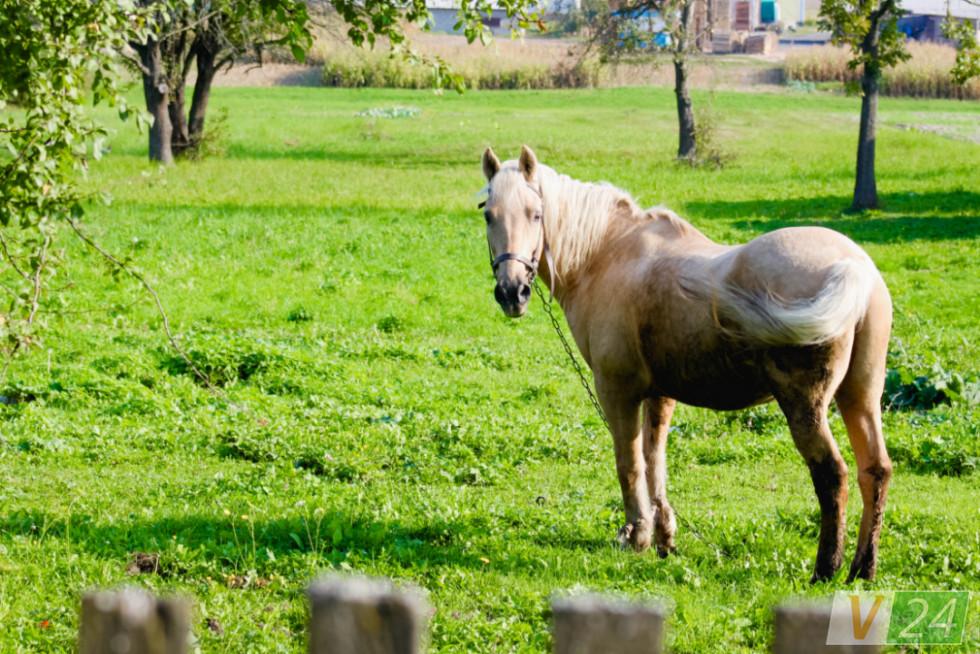 Тут багато коней...