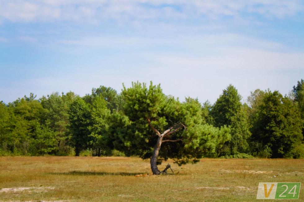 В урочищі Ковпак пасуть сільську худобу. Правда, зараз там - тільки коні...