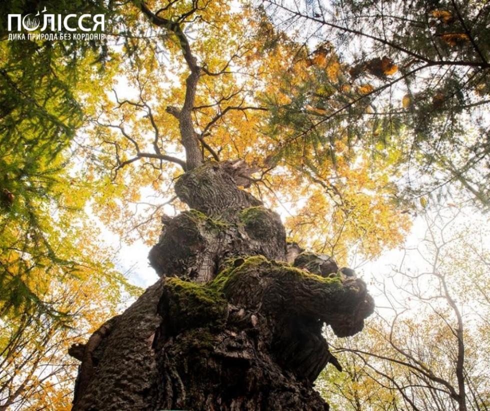 Глянеш - ліс як ліс, а виявляється - унікальний природний ліс, яких майже не лишилося